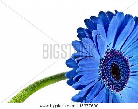 Abstract eines blauen Gänseblümchens hautnah