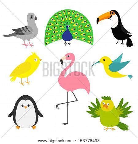 Exotic bird set. Colibri canary parrot dove pigeon flamingo toucan penguin peacock Cute cartoon characters icon. Baby animal zoo collection Isolated White background Flat design Vector