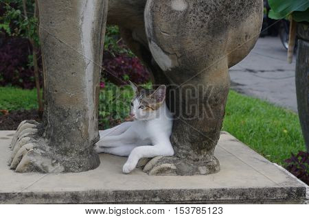 Сat on rest at the feet of the stone cat. Like a human.