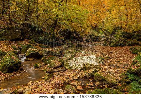 Autumn forest with stream flowing through the thicket