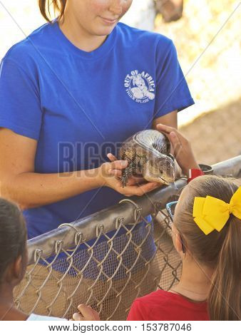 CAMP VERDE, ARIZONA - OCTOBER 13: The Out of Africa Wildlife Park on October 13, 2016, near Camp Verde, Arizona. An Out of Africa Worker Shows Off a Red Tegu, Tupinambis rufescens, at the Out of Africa Wildlife Park near Camp Verde, Arizona.