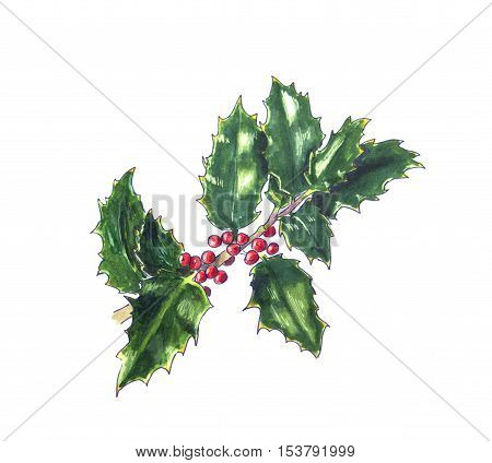 Christmas holly branch on white. Hand drawn sketch