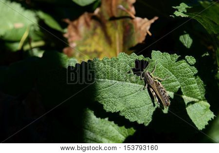 Grasshopper on a leaf in a fall garden with fallen autumn leaves shadows and sunlight