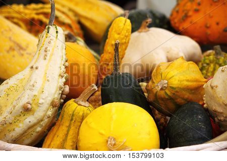 Many pumpkins for sale in a greengrocery