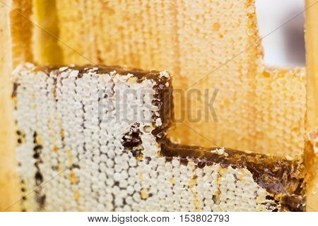 frame with honey bee and a beeswax