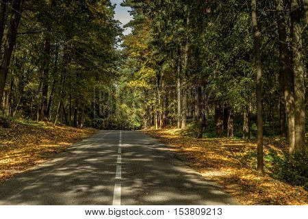 The Road Between  Trees