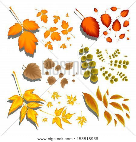 Autumn leaves of different shapes and different trees on a white background. A set of brushes of the leaves to work and design in Illustrator. We present examples of execution. Stock vector.