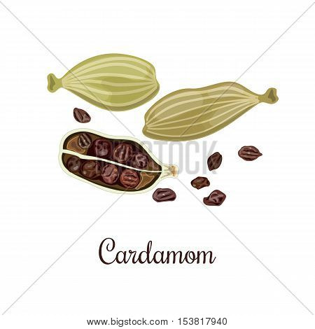 Cardamom vector illustration. Culinary seasoning. Cooking Spice. Seasoning for food. Cardamom grains. Cardamom spice. Cardamon. Green and brown. Cardamum
