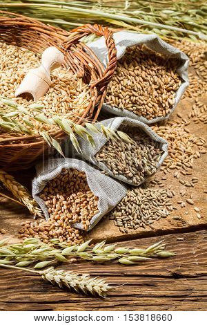 Rye, Barley And Wheat Are The Basis For Good Bread