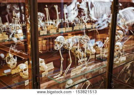 Skeletons Of Animals In The Gallery Of Palaeontology And Comparative Anatomy In Paris