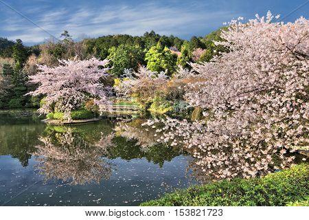 Kyoto - Ryoanji