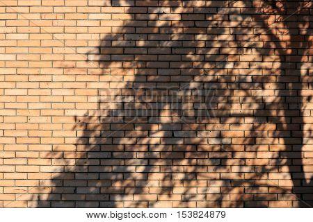 Shadow of tree on the brick wall.