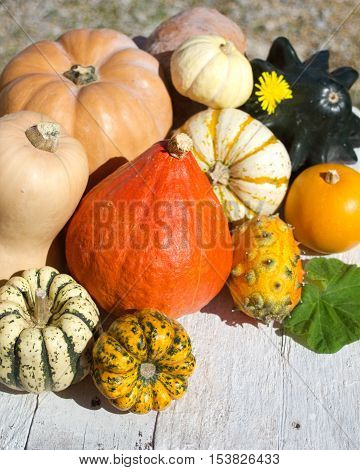 Assortment of Pumpkins on white old wood background