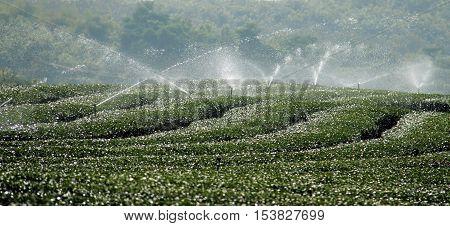 Water irrigation system of green tea field