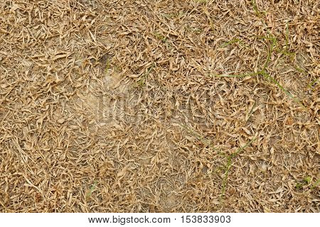 dry grass texture, nature background for design