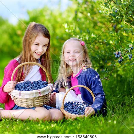 Cute Little Sisters Picking Fresh Berries On Organic Blueberry Farm