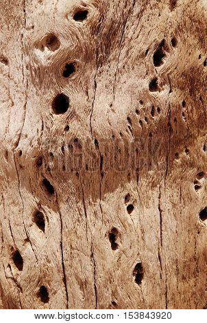 Dry cactus wood bark background texture. Detail