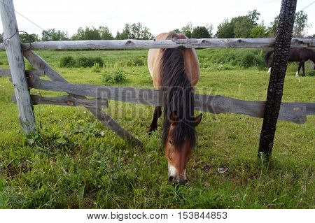 horse, horses, track, race, white, field, grass, racecourse, background