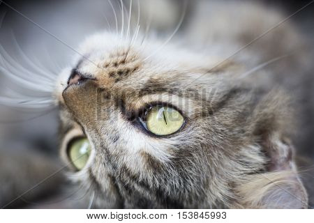 close up face of cat and eyes background.
