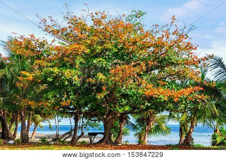 Colorful Trees On Mana Island, Fiji