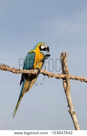 The parrot macaw on blue sky background.