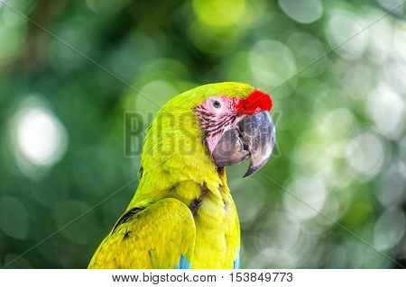 Green And Red Ara Parrot Outdoor
