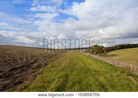 Bridleway And Woodlands
