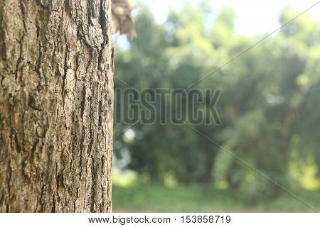 Teak tree trunk on green forrest background