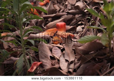 Dry leaf on ground sideview Natural Abstract background