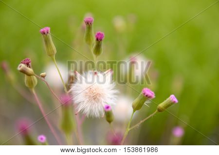 Small white pink wildflowers Natural Abstract background close up view