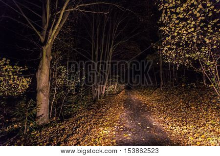 Lighted path with fallen leaves at night. Autumn and Moravian landscape Melkov.