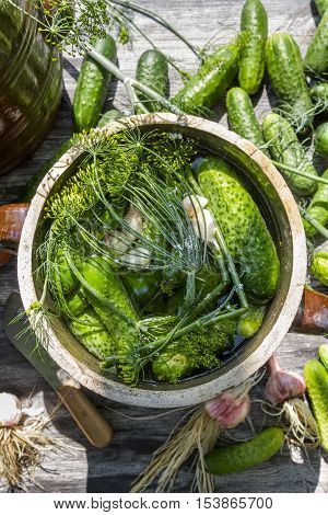 Closeup of pickling cucumbers in the countryside