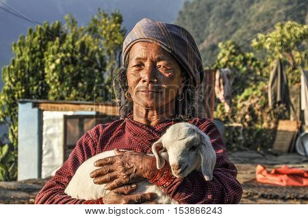 Portrait Of Old Nepalese Woman. She Wears The  Young Lamb In Her Hands.