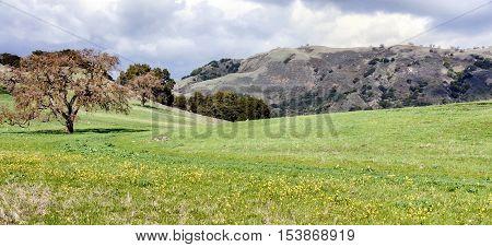 Northern California Landscape. Harvey Bear Trail, San Martin, Santa Clara County, California, USA