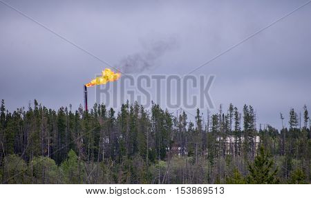 Flare stack with flames above treeline in oilfield on grey day