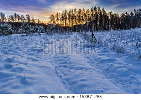 Cols sunrise over a snow covered forest
