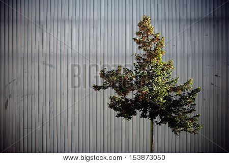 An ornamental tree in front of a prominent facade made of riffle plate or sheet metal strips.
