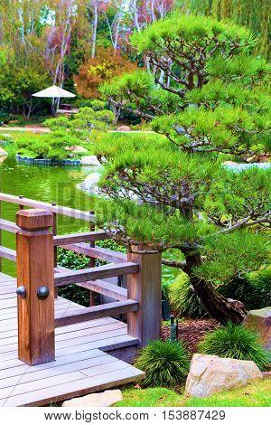 Manicured Pine Tree, beside a wooden bridge beside a pond taken in a Zen Japanese Spiritual Meditation Garden