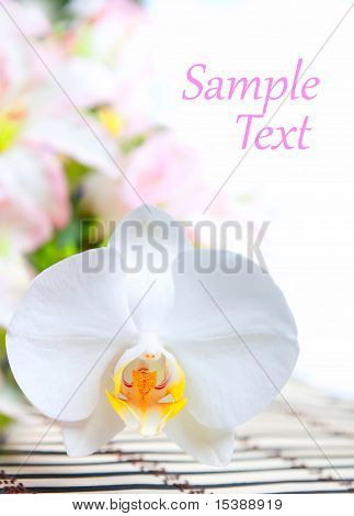 white orchid wiht  blossoms and buds over light poster