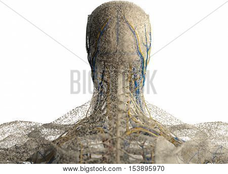 Human anatomy head, neck and shoulders covered in network of dots. Bio-tech skin, disease or molecular biology. Sensory points or cells. 3D illustration.
