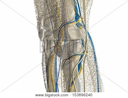Human anatomy knee joint covered in network of dots. Bio-tech skin, disease, infection or molecular biology. Sensory points or cells. 3D illustration.