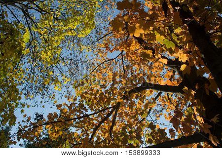 Autumn green and orange leaf with sky