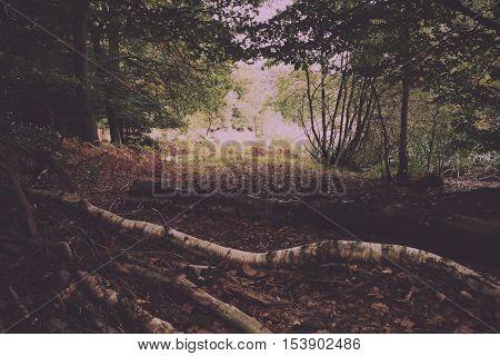 Woodland Scene At The Start Of Autumn Vintage Retro Filter.