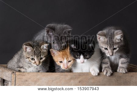 litter of kittens inside a wooden box on black background