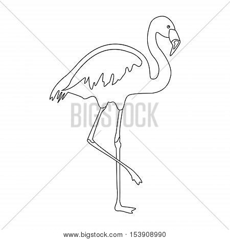 Flamingo Outline Drawing