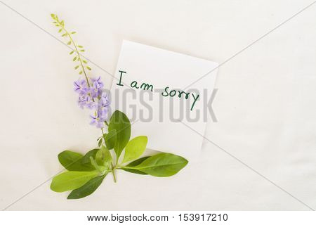 i am sorry message card and little purple flowers on background white
