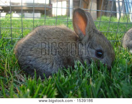 Dark Gray Baby Rabbit