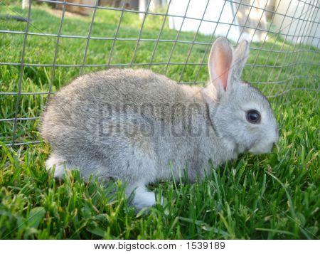 Light Gray Baby Rabbit