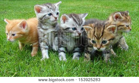Cute, adorable kittens.  perfect image for screensaver, wall photo, your blog or website