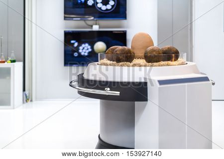 Dinosaur Egg In Science Laboratory Of Paleontology